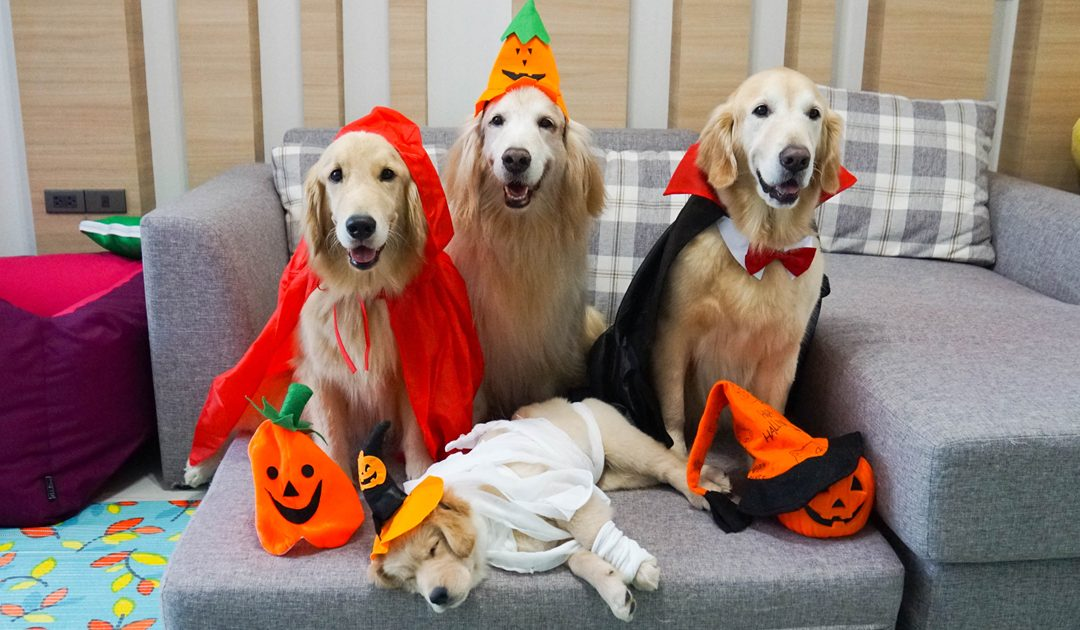 Halloween Safety Tip: Pet Safety