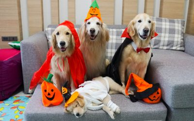 Halloween Safety Tip: Four-Legged Friends