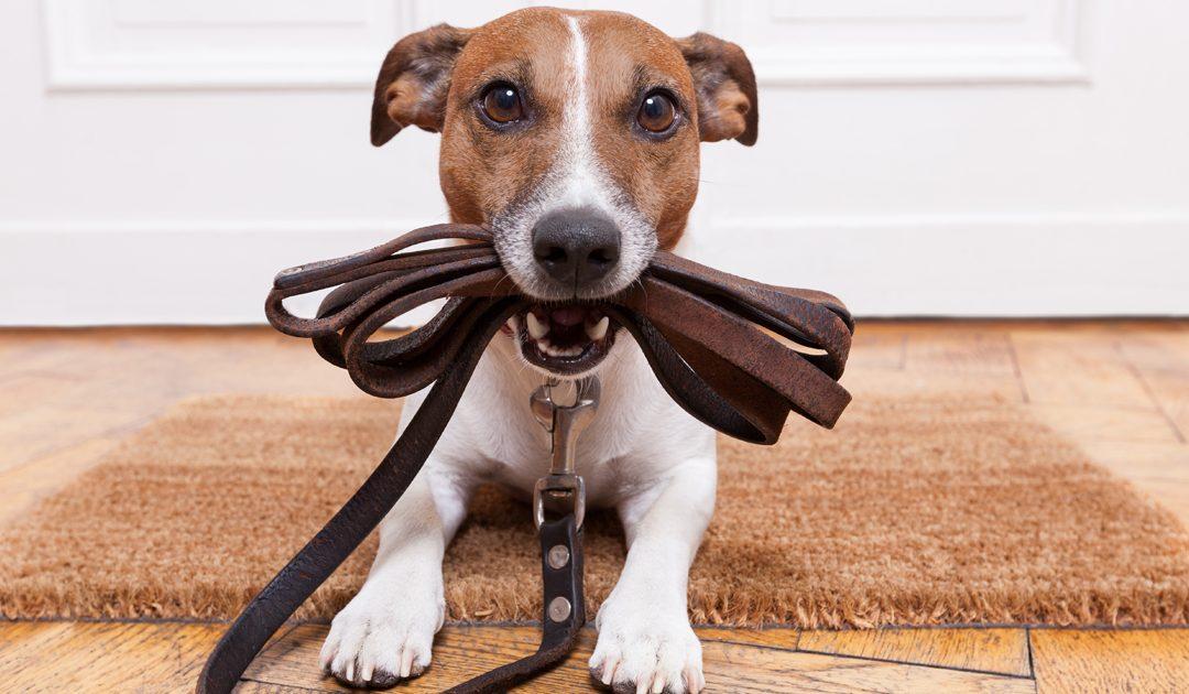 Summer Travel: Pet Sitters